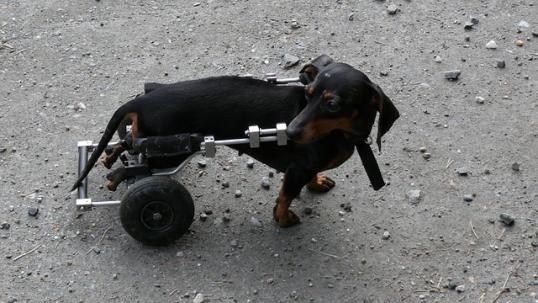 potrącenie psa sennik